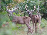 Scouting Photos, , , deer hunt wisconsin, deer hunting wisconsin apple creek buck ranch, deer hunting outfitters