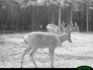Scouting Photos, , , deer hunt wisconsin, deer hunting wisconsin apple creek buck ranch, deer hunting outfitters